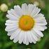 ACC3BA03 - RHS Lv2 Certificate in Horticulture
