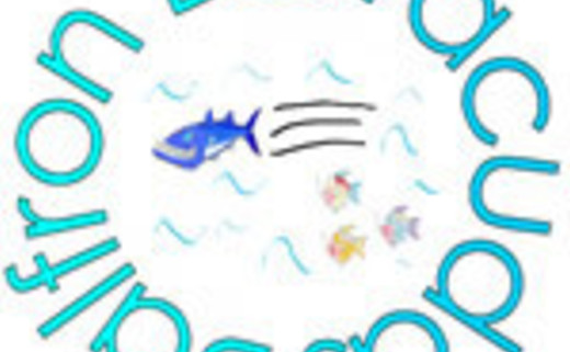 Balfron Barracudas Swimming Club