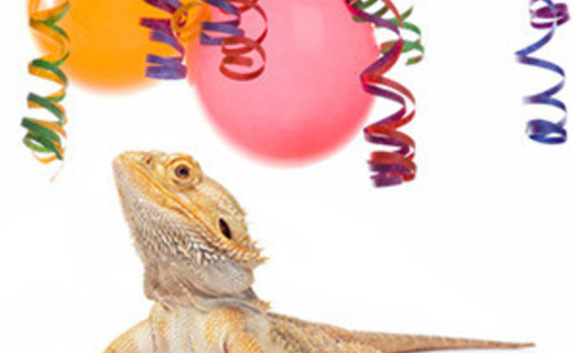 Regular_bearded-dragon-left-reptile-party