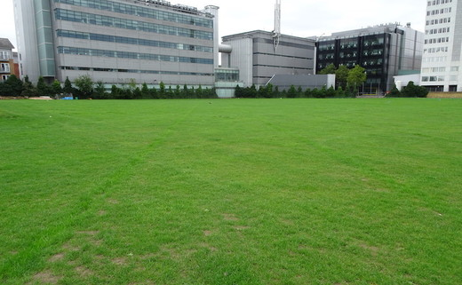 Regular_ark_burlington_danes_-_grass_pitches_3