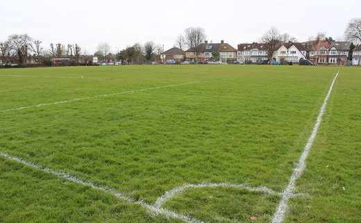 Regular_wren_grass_pitch_1040x642
