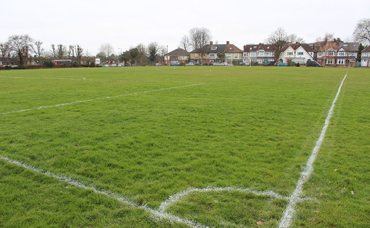 Regular_wren_grass_pitch_1040x642