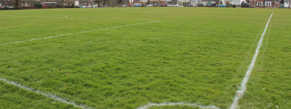 Regular_wren_grass_pitch_slide